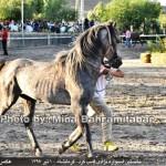 photo-shahreman_970401_02
