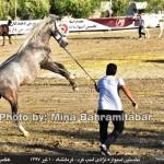 photo-shahreman_970401_15