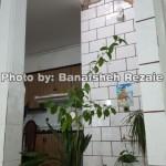 photo-shahreman_970815-07