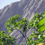 photo-shahreman-0119a