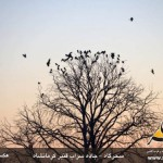 photo-shahreman-0122a