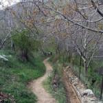 photo-shahreman-0131e