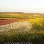 photo-shahreman-0228a